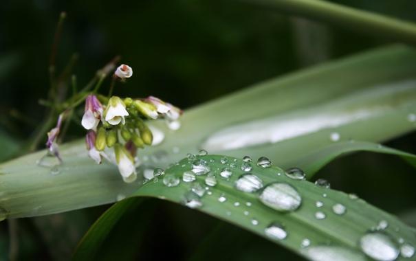 Фото обои цветок, трава, капли, макро, зеленый, роса