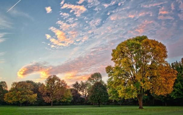 Фото обои небо, трава, деревья, природа, дерево, пейзажи, самолёты