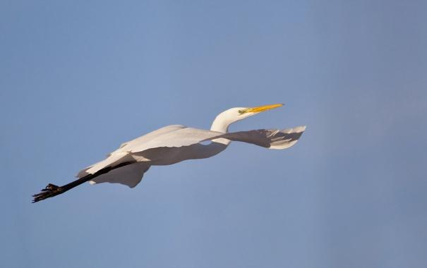 Фото обои птица, полёт, небо