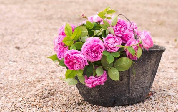 Фото обои цветы, галька, розы, горшок, розовые