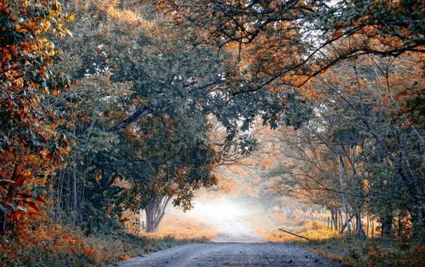 Фото обои дорога, деревья, пейзаж