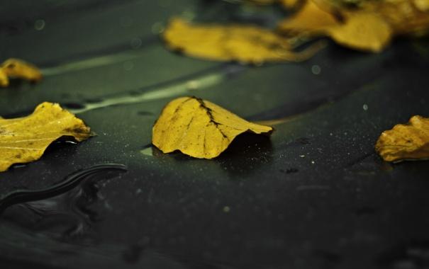 Фото обои листья, дождь, желтый, асфальт, Лист, осень, мокрый