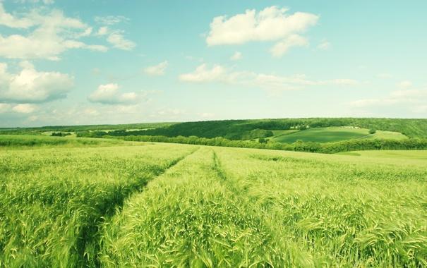 Фото обои зелень, поле, небо, облака, деревья, пейзаж, природа