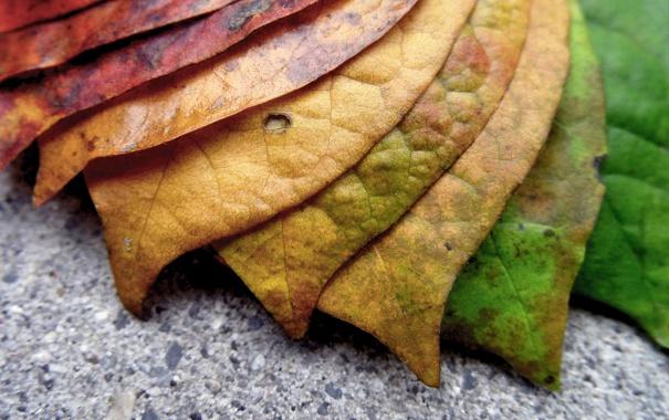 Фото обои макро, листва, светофор