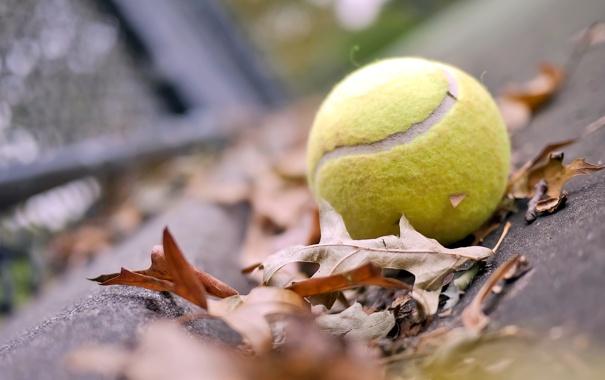 Фото обои осень, листья, настроение, мяч, tennis, ball, теннисный мяч