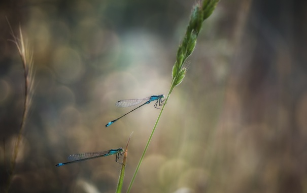 Фото обои eyes, wings, bokeh, leaf, paws, stalk, dragonflies