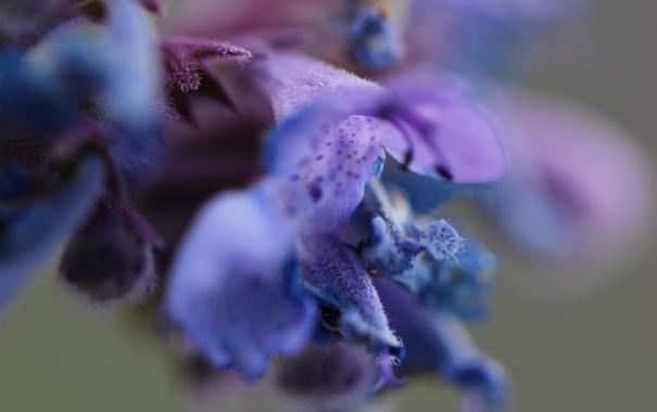 Фото обои цветок, фон, размытие, лепестки