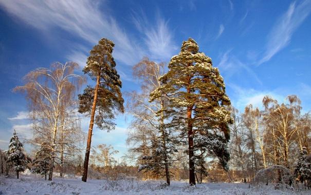 Фото обои зима, деревья, природа, фото