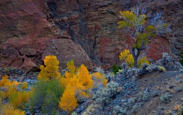 Фото обои осень, деревья, скала, гора, Юта, США, Zion National Park