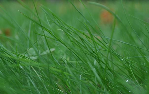 Фото обои Трава, Парк, Газон