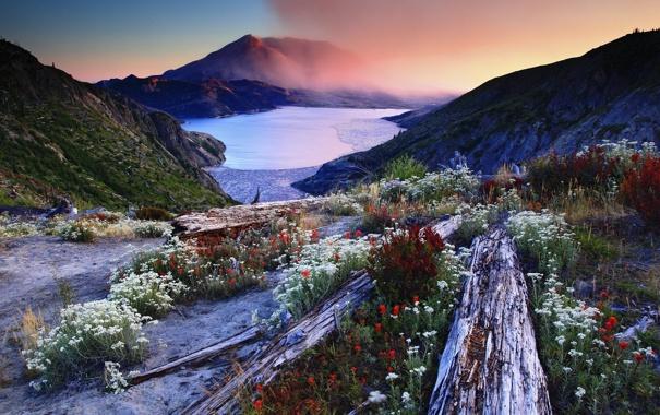 Фото обои пейзаж, цветы, горы, nature