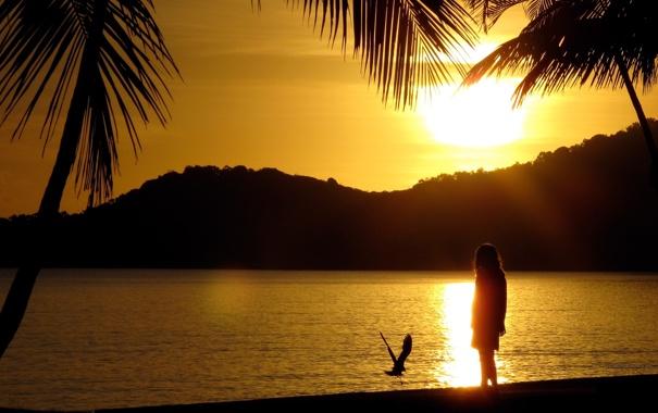 Фото обои пляж, солнце, закат, пальмы, берег, остров, чайка