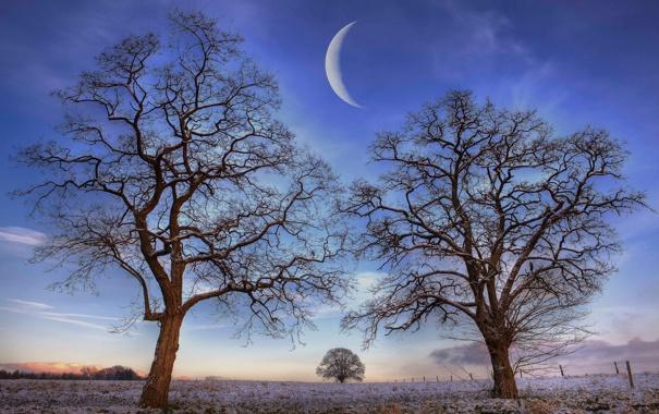 Фото обои поле, небо, деревья, ночь, природа, луна