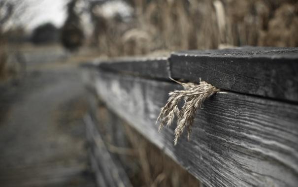 Фото обои макро, забор, bokeh