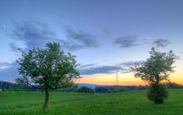 Фото обои деревья, природа, вечер
