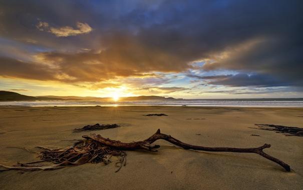 Фото обои море, солнце, облака, водоросли, закат, коряга, плялж