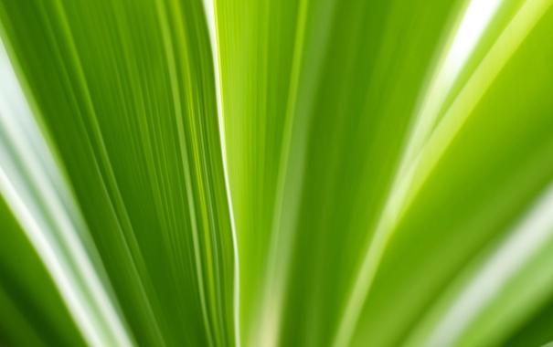 Фото обои макро, лист, цвет