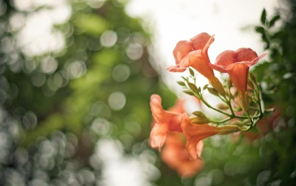 Фото обои блики, растение, оранжевый, зелень, размытость, цветок, природа