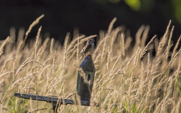 Фото обои трава, природа, птица