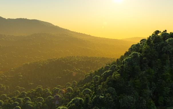 Фото обои лес, пейзаж, горы, природа, туман, фото, утро