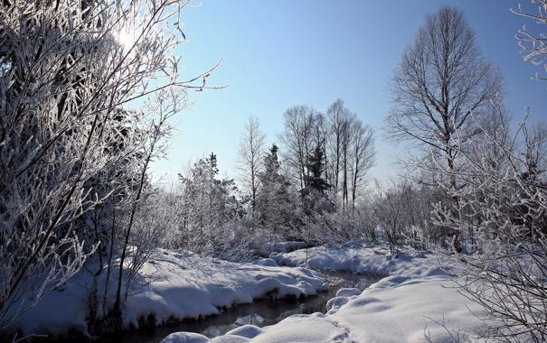 Фото обои зима, лес, природа