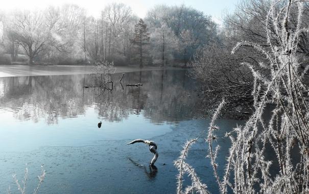 Фото обои зима, иней, снег, озеро