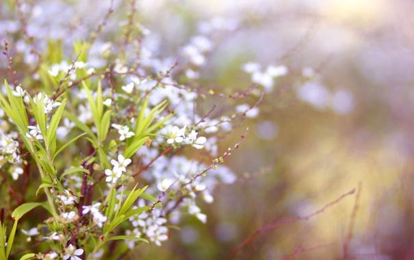 Фото обои весна, веточки, цветы