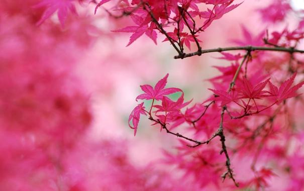 Фото обои осень, листья, деревья, осенний окрас