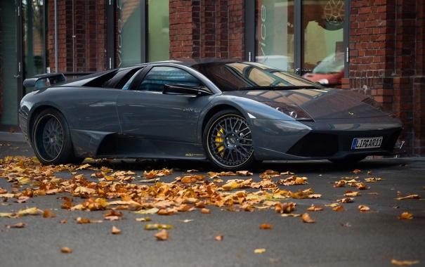 Фото обои серый, листва, Lamborghini, суперкар, Murcielago