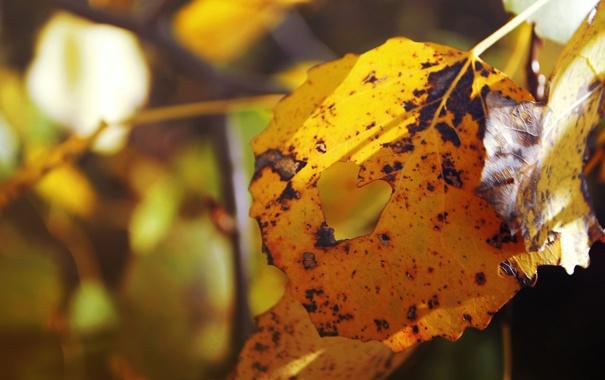 Фото обои осень, листья, сердце, сердечко