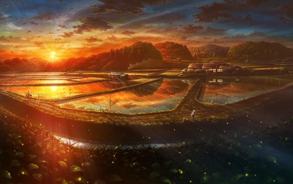 Фото обои дорога, лес, вода, солнце, пейзаж, закат, велосипед