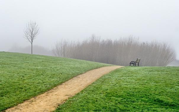 Фото обои пейзаж, дорожка, трава, лес, дерево, туман, скамейка