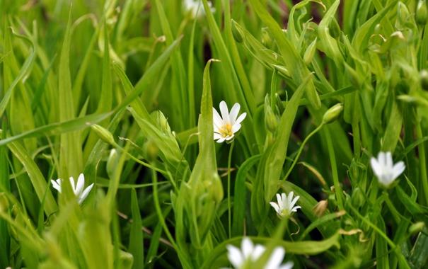 Фото обои природа, Цветы, весна