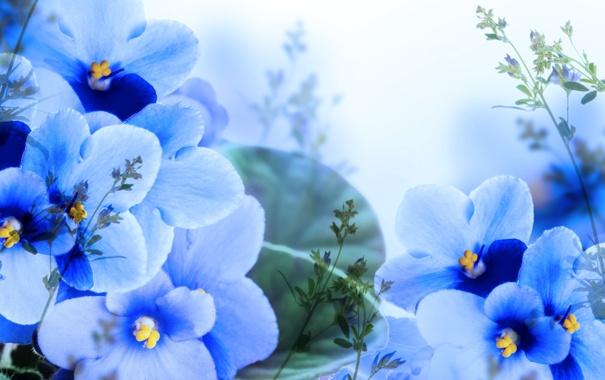 Фото обои листья, цветы, ветки, лепестки, цветение, синие, листики