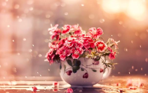 Фото обои вода, капли, макро, цветы, лепестки, чашка, гвоздики