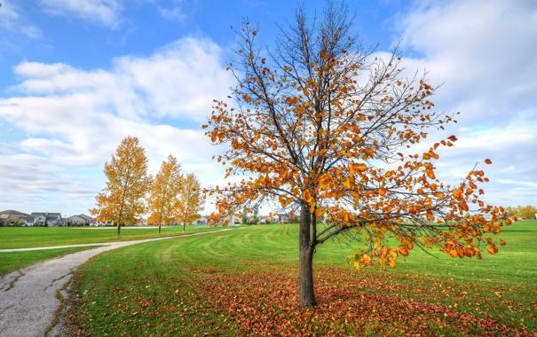 Фото обои осень, небо, трава, дом, дерево, дорожка