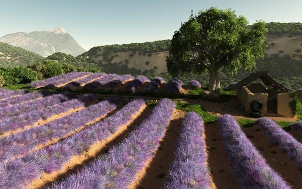 Фото обои поле, цветы, дерево, холмы, арт, ряды, лаванда
