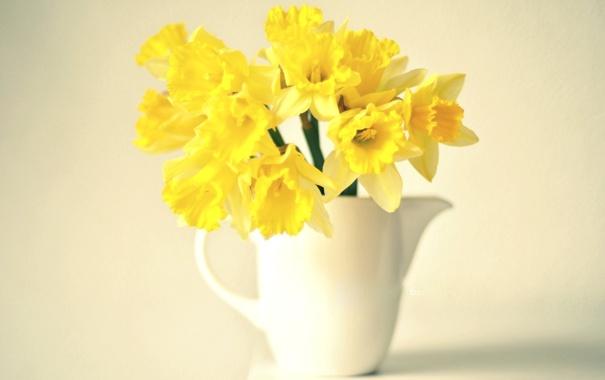 Фото обои цветы, фон, желтые, нарциссы