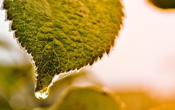 Фото обои лист, зеленый, капля, утро