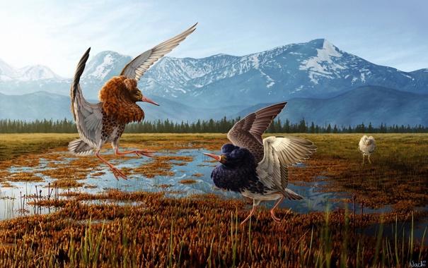 Фото обои трава, вода, горы, птицы, природа, болото, танец