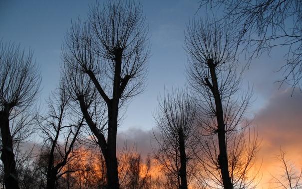 Фото обои небо, облака, деревья, закат, силуэт