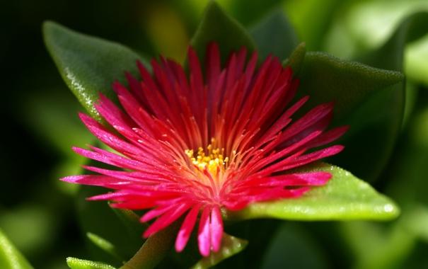 Фото обои цветок, один, Tiny Beauty