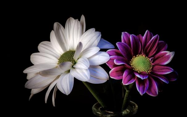 Фото обои цветы, фон, лепестки