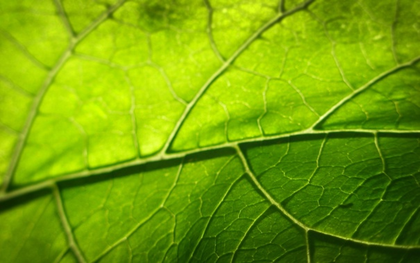 Фото обои зелень, листья, листва, листок, листочки, листки, листики