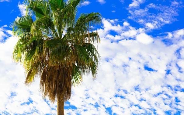 Фото обои небо, облака, пальма, веерные листья