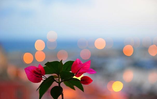 Фото обои листья, цветы, растение, окно, блик