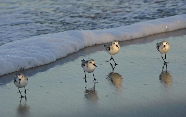 Фото обои песок, волна, Птички