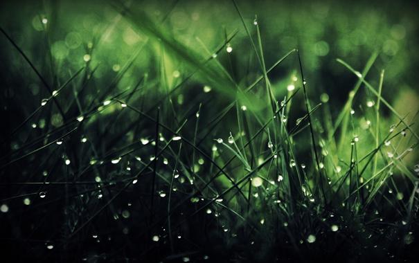 Фото обои зелень, трава, капли, роса