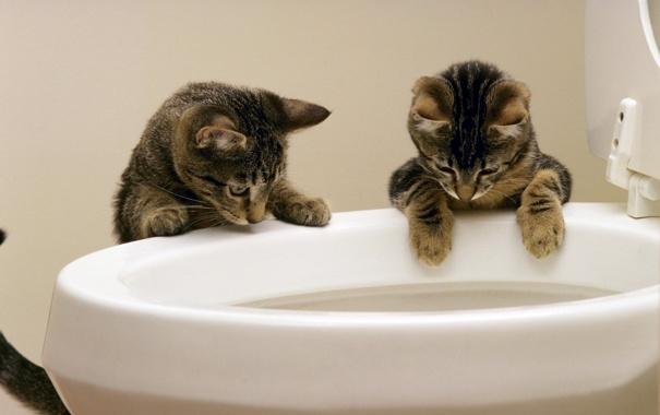Фото обои ситуация, унитаз, Коты