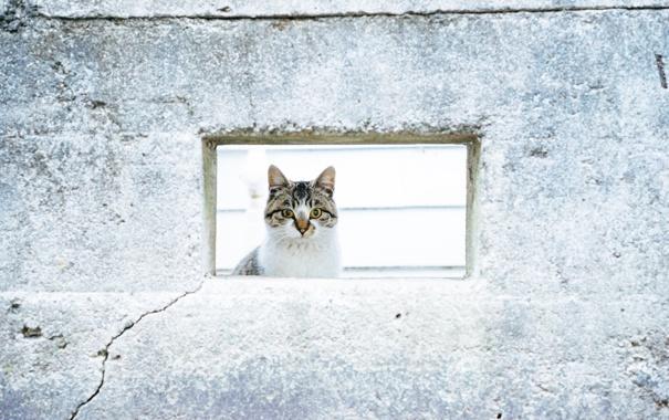 Фото обои кот, взгляд, стена, кошак, котяра